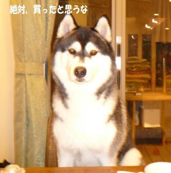 091001_2.jpg