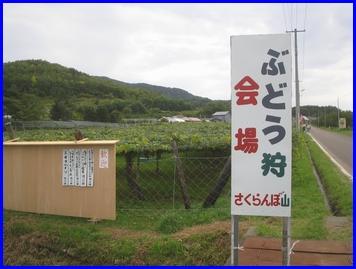 niki-2009-9-21-2.jpg
