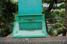 スズメバチ予防器(和蜂)