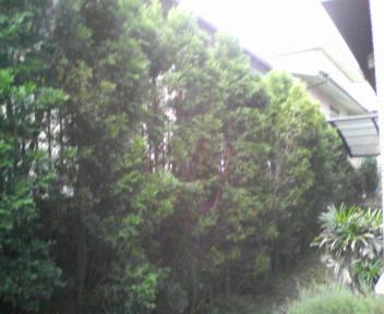 treemae.jpg