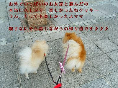 s-2009_0731MOMO運動会0019