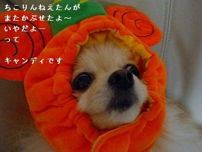 s-2009_0731MOMO運動会0030