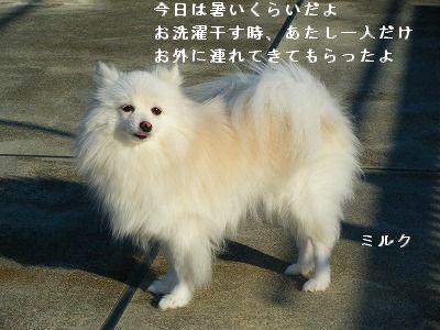 s-2009_0731MOMO運動会0001