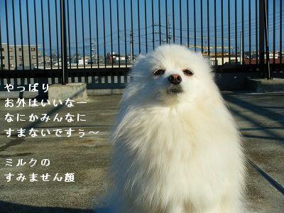 s-2009_0731MOMO運動会0002