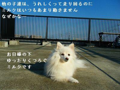 s-2009_0731MOMO運動会0004