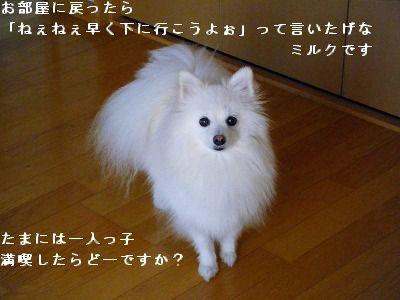 s-2009_0731MOMO運動会0005
