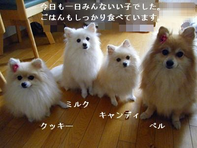 s-2009_0731MOMO運動会0006