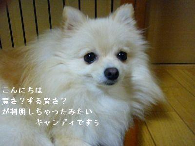 s-2009_0731MOMO運動会0041
