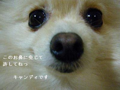 s-2009_0731MOMO運動会0044