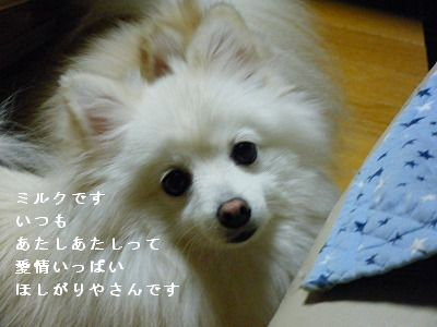 s-2009_1018MOMO運動会0003