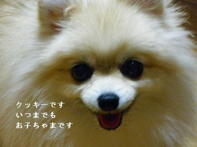 s-2009_1018MOMO運動会0004