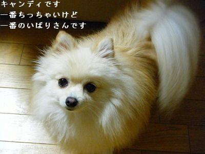s-2009_1018MOMO運動会0005
