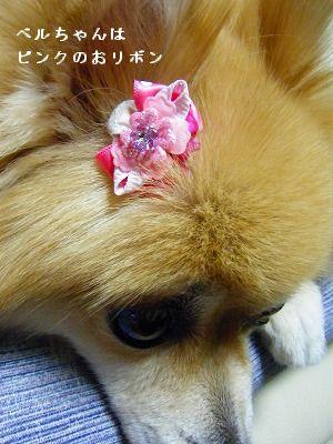 s-2009_1018MOMO運動会0017