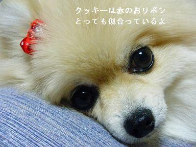 s-2009_1018MOMO運動会0018