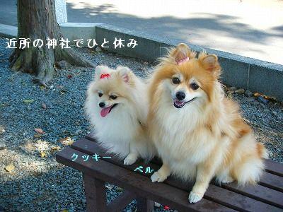 s-2009_1018MOMO運動会0023