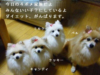 s-2009_1022MOMO運動会0009