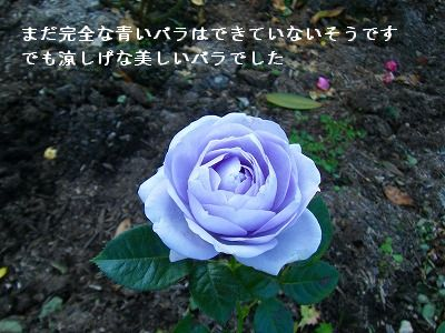 s-2009_11104ポメ0037