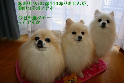 s-IMG_1303_20111114000146.jpg