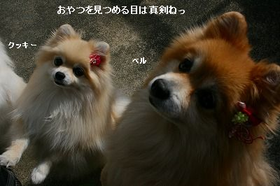 s-IMG_1502.jpg