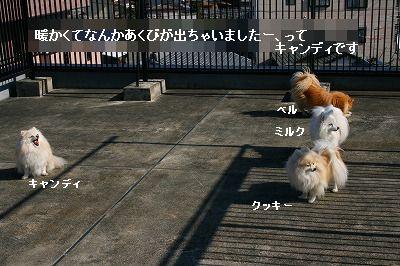 s-IMG_2106_20120130215601.jpg