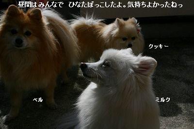 s-IMG_2121.jpg