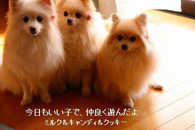 s-IMG_2791_20120210213201.jpg