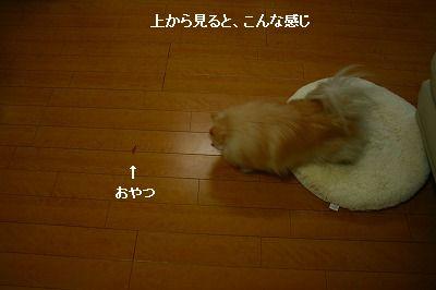 s-IMG_2905_20120216201536.jpg