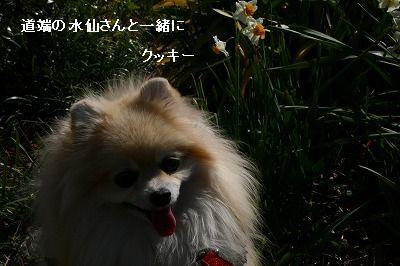 s-IMG_2968_20120217195905.jpg