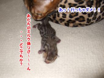 20090926_12.jpg