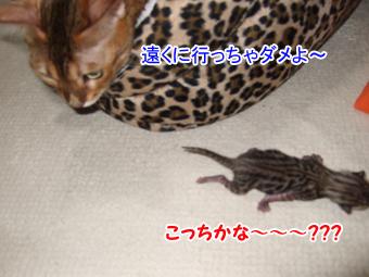 20090926_13.jpg