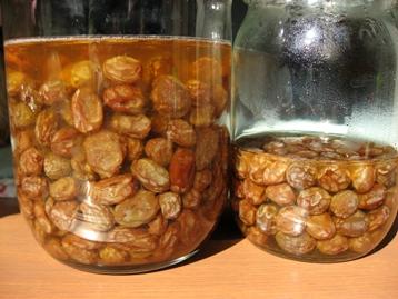 自家製酵母の素