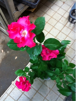 iphone_20111112174723.jpg