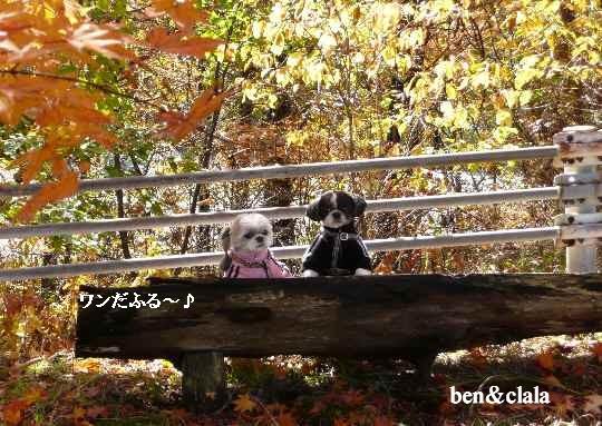 b7_20071030195634.jpg