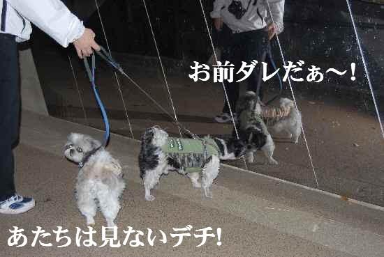 shiki14.jpg