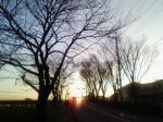帰路の朝日。