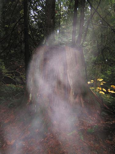 ボーウェン島の切り株にまとわりつく霊体 by PHILIPPE SOKAZO