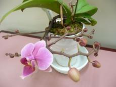 ミニ胡蝶蘭