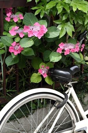 2011-10-08 華1091