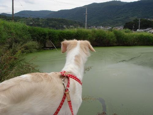王越・サラ池にて