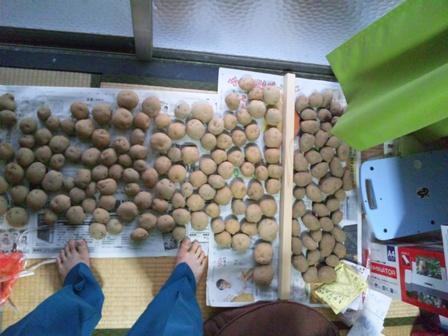 ジャガイモの種イモ