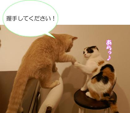 握手して!