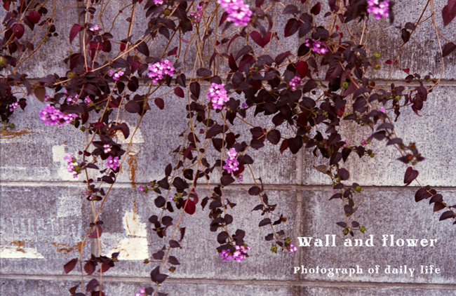 Wall and flower