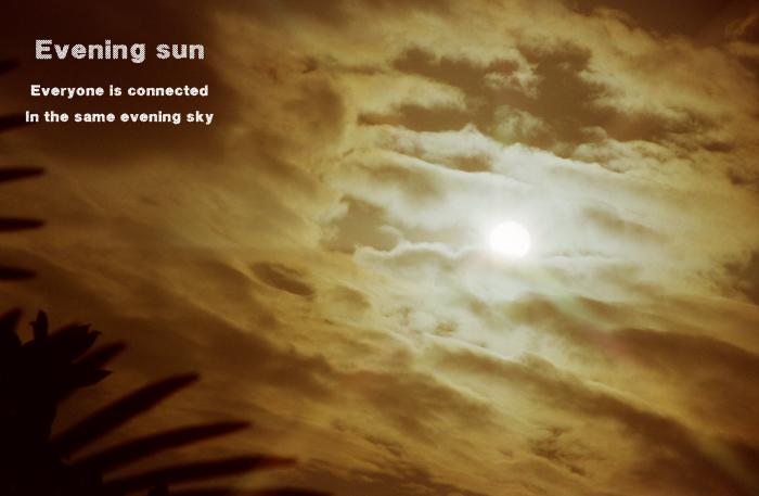 Evening sun2