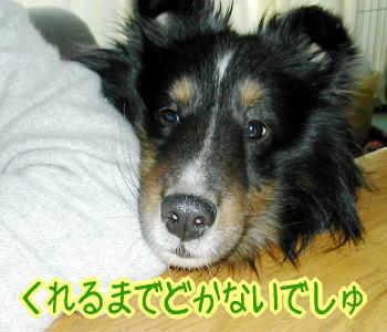 kudasai3.jpg