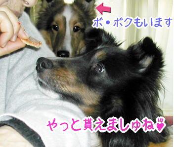 kudasai5.jpg
