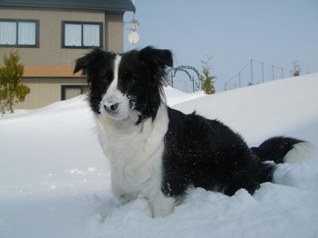 dog20080226 009