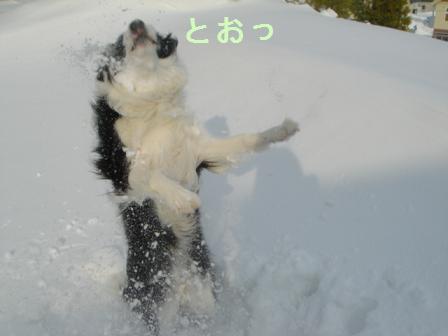 dog20080226 013