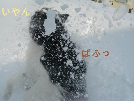 dog20080226 018