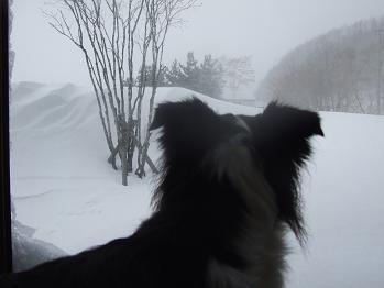 dog20080224 024