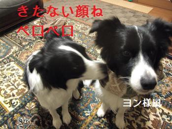 dog20080215 004